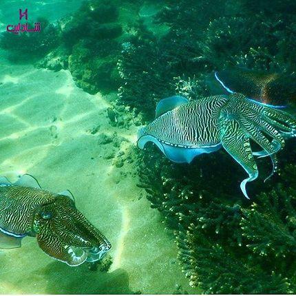 شناور ستاره دریایی
