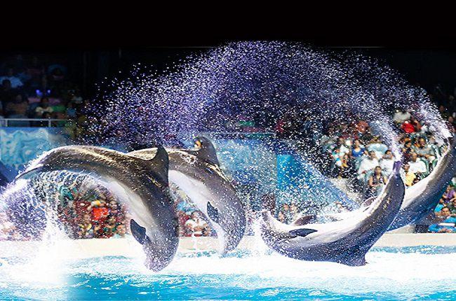 پارک دلفین